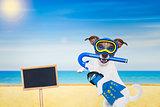 scuba diving dog