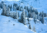 Winter mountain slope with firs.