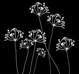 Fennel Flower Silhouette
