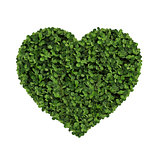 heart made of clover Isolated on White Background