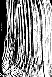 Wooden grungy lines texture background in black and white