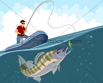 Fisherman catches zander