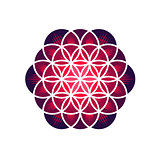 Purple Flower of Life