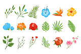 Traditional and tropical flowers