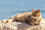 Cat by the sea