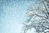 winter background looking up into a tree in a snowy weather