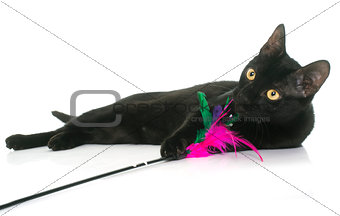 black young cat playing