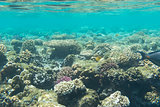 Underwater coral reefs