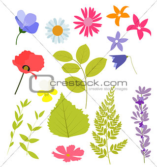 Abstract Natural Spring Elements from Flowers and Leaves. Vector
