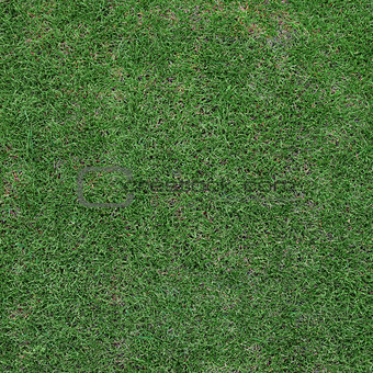 Top view on field of unideal lawn. Background grass texture