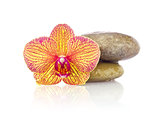 Striped flower of orchid with wet stones
