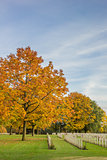 Colorful tree at the canadian war graves in Groesbeek