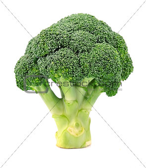 Broccoli close up