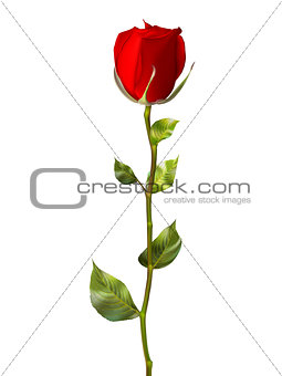 Single red rose isolated on white. EPS 10