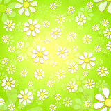 spring white flowers over green background