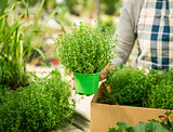 Choosing fresh herbs