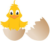 Easter chick and broken egg