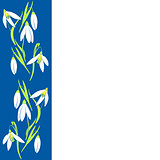 snowdrop flowers, spring vertical card. Vector illustration