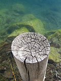 Weathered and cracked wooden post in green mountain lake