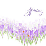 Floral frame with crocuses and  snowdrops. Purple background