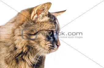 Portrait of the Cat