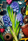 Spring hyacinth, easter eggs and garden tools