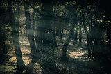 Mystique Dark Forest