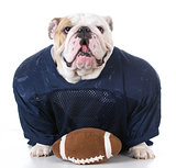 dog dressed like football player