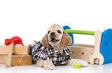 cute working dog