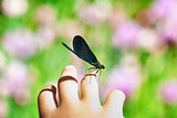 Dragonfly on child hand