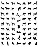 races of dogs