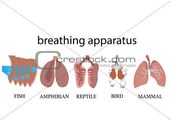 breathing apparatus of vertebraters