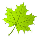 Summer Maple Leaf Low Poly