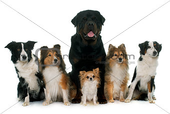 six beautiful dogs