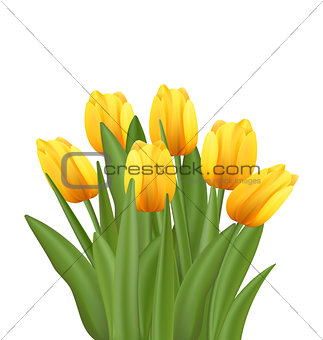Beautiful Bouquet with Yellow Tulips Flowers