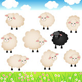 Cute Sheep Set