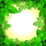 leaves sunny frame