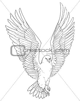 Sketch illustration of a soaring eagle