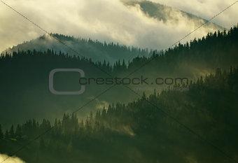 Foggy Carpathian forest