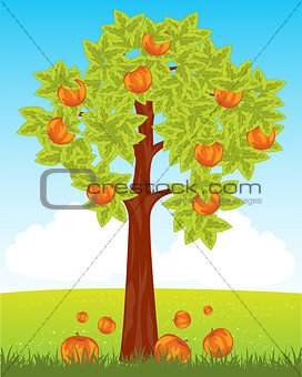 Aple tree with red apple