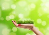 Young woman hand with fresh green grass on it. Bright bokeh background. Concern for the environment concept