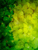 Shamrock Leaves Background Illustration