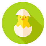 Hatched Chicken in Eggshell Circle Icon