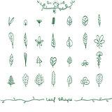 Doodle Leaf Shape Outline