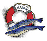 illustration on the marine theme