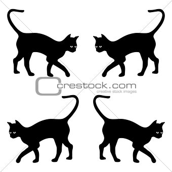 background with black cats