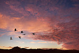 Clouds with birds on sunrise time