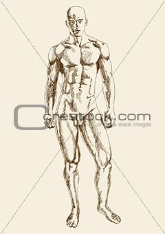 Sketch illustration of male anatomy