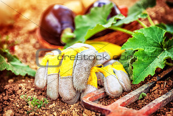 Agricultural still life outdoors