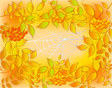 Background of autumn leaves, rowan and web with dew drops. EPS10 vector illustration